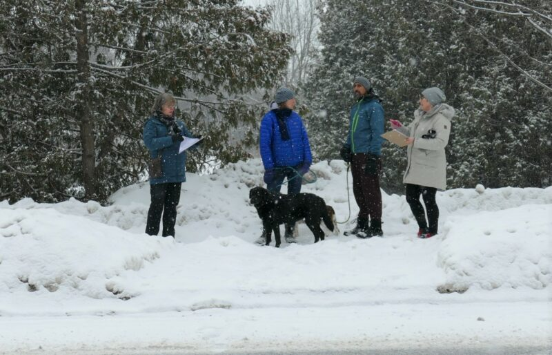 COA Snow Mole audit
